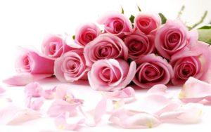 gulab_flower